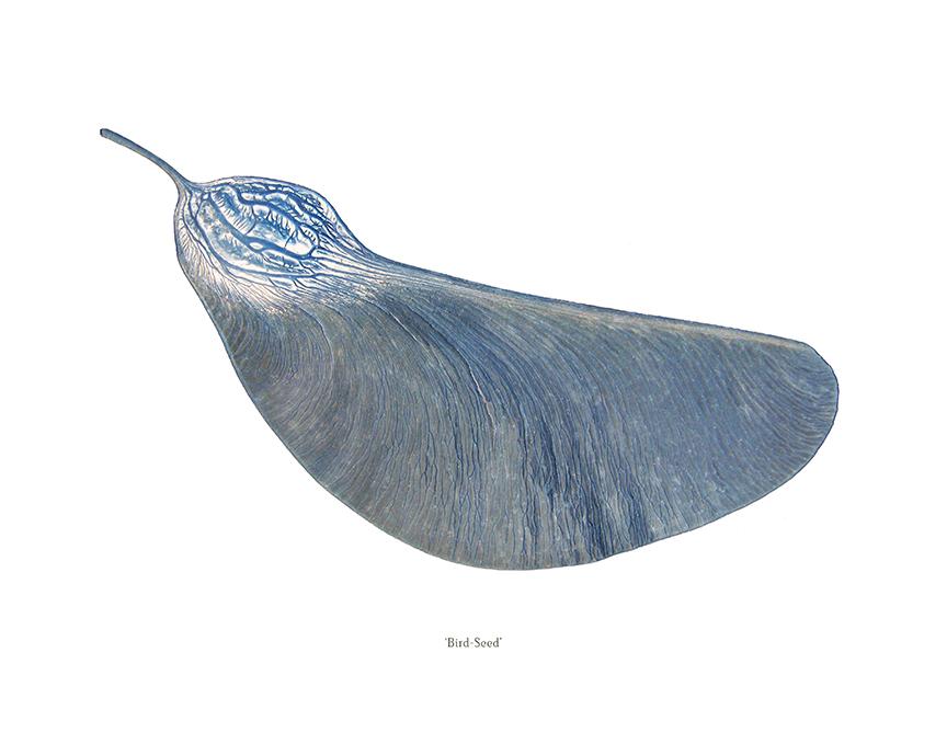 Bird-Seed alt