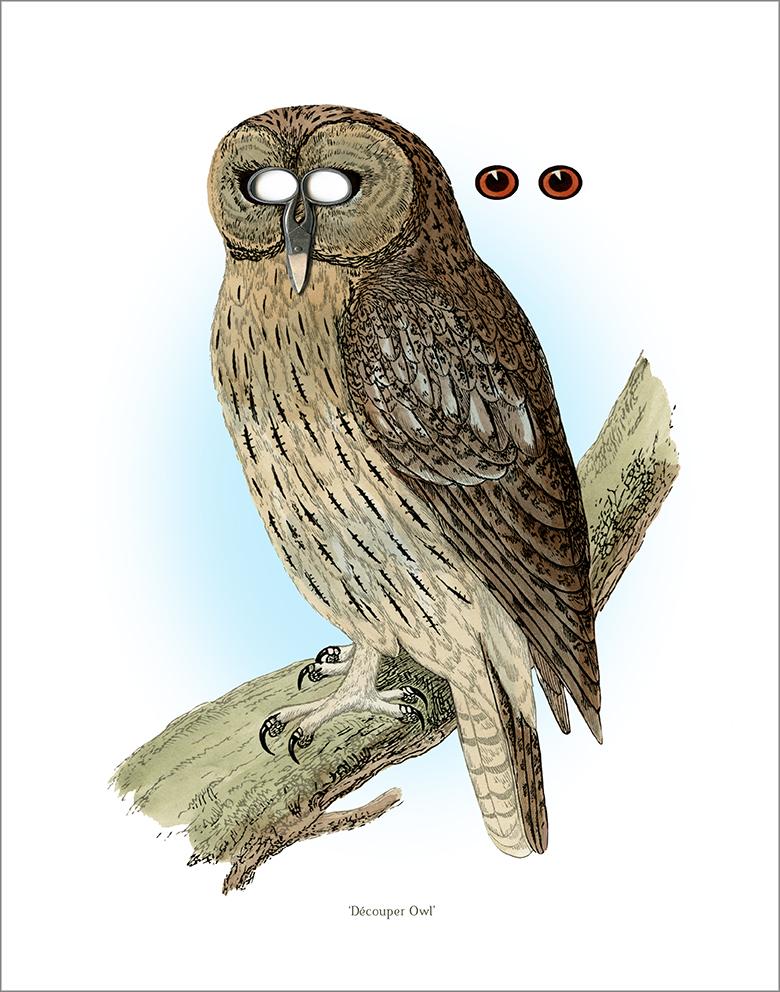 Decouper Owl.psd