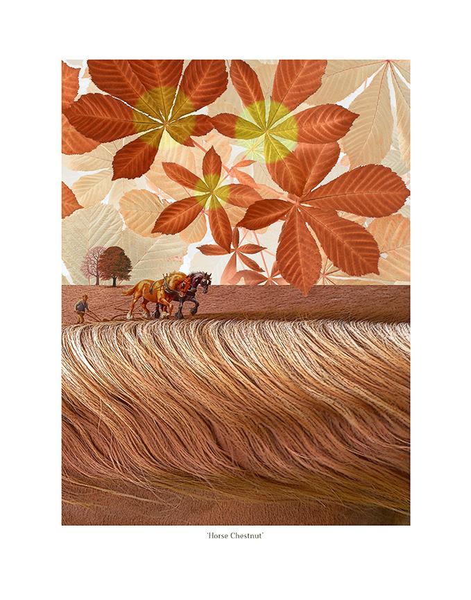 Horse-Chestnut alt