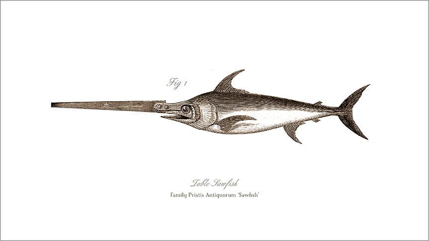 Table-Sawfish