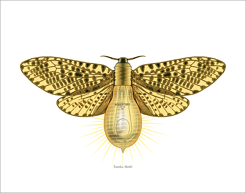 Eureka Moth